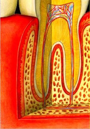 Fotos Odontológicas - www.joseeduardomattos.com.br